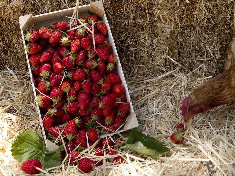 Caja de fresas de Finca Monjarama